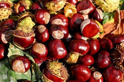 chestnut-1710430_1280